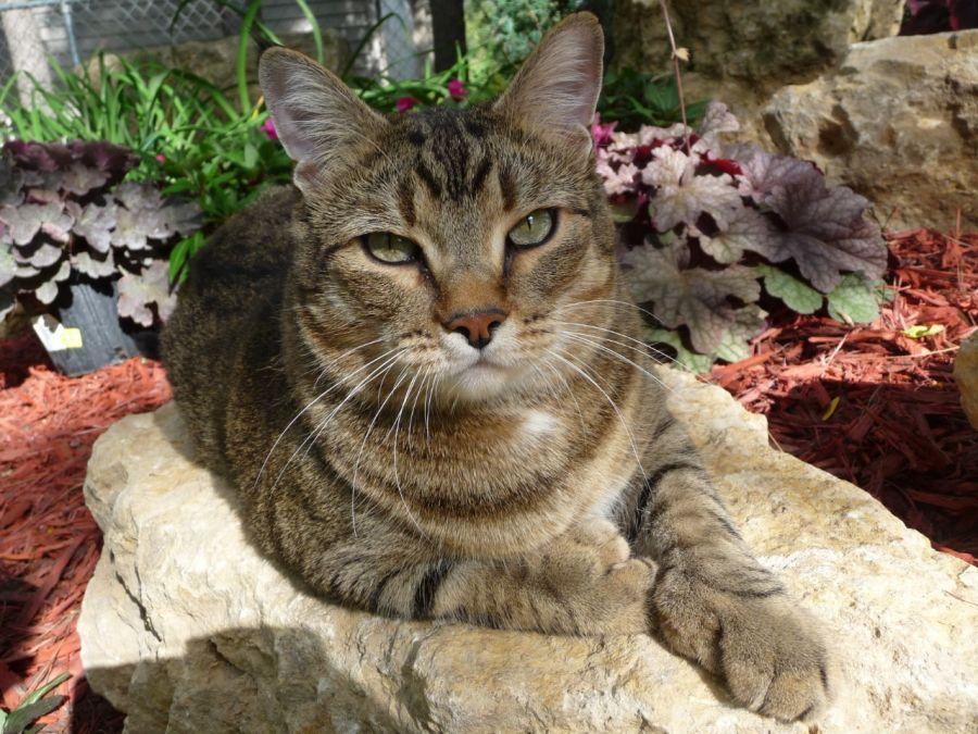 Kittywhompus Holan