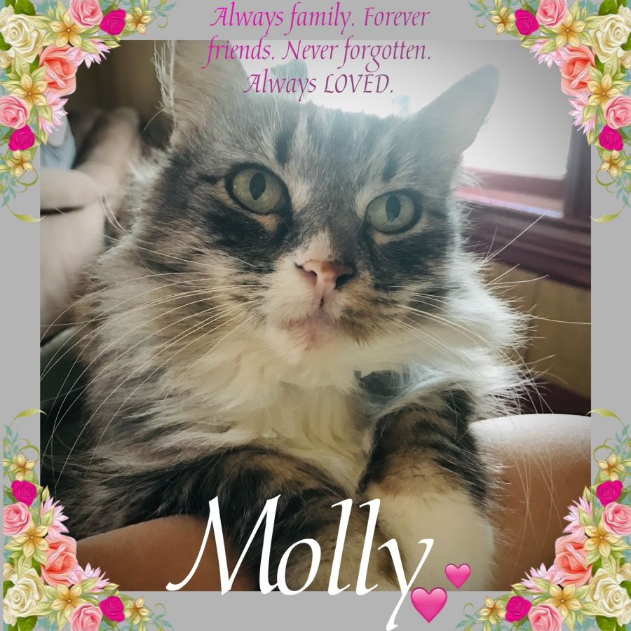Molly Lucy